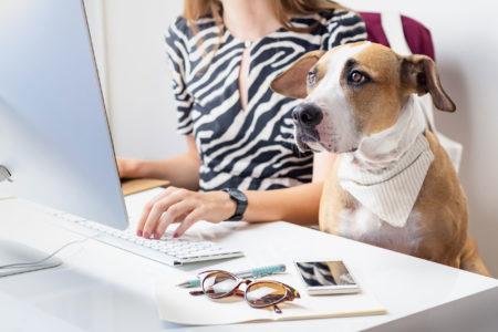 Wash Dog – o co właściwie chodzi?